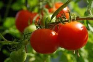 Tomatoes and Lycopene